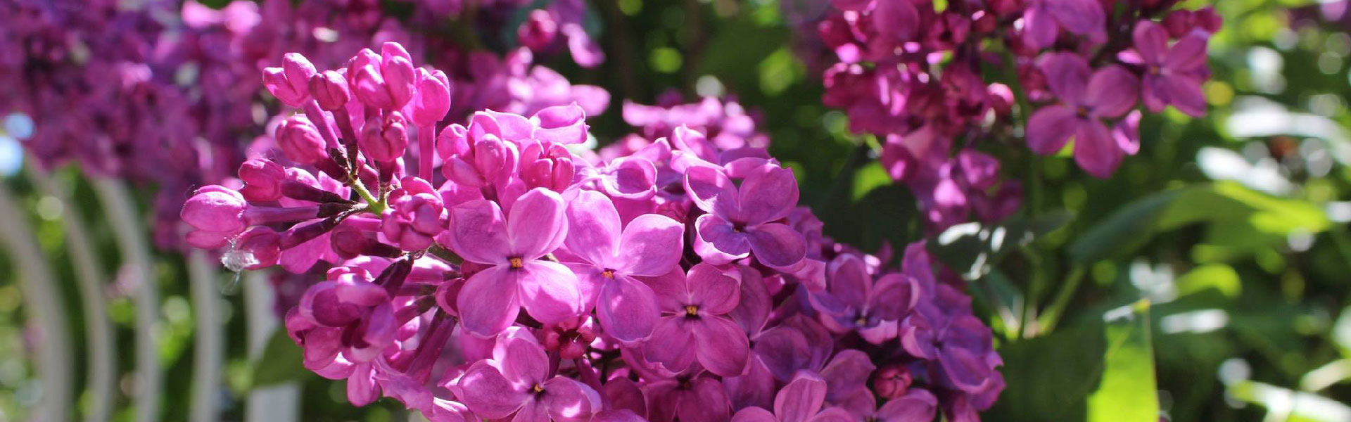 flowers-slide