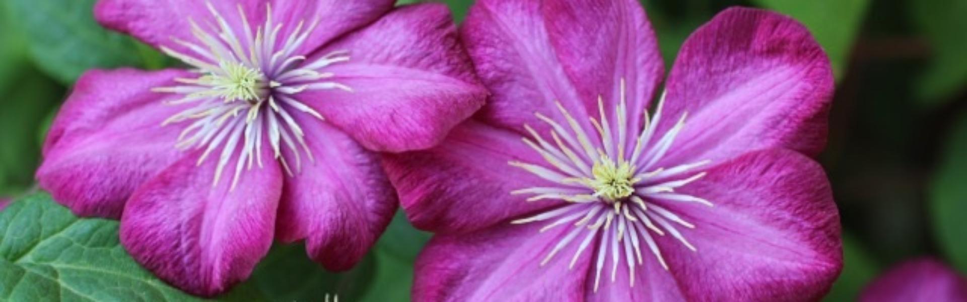 FlowersSlider